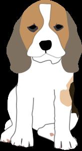 beagle-puppy-300px